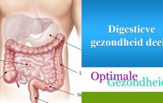 digestieve gezondheid verssterken