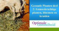 geneeskrachtige planten en kruiden