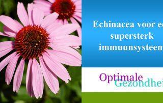 Echinacea voor een supersterk immuunsysteem