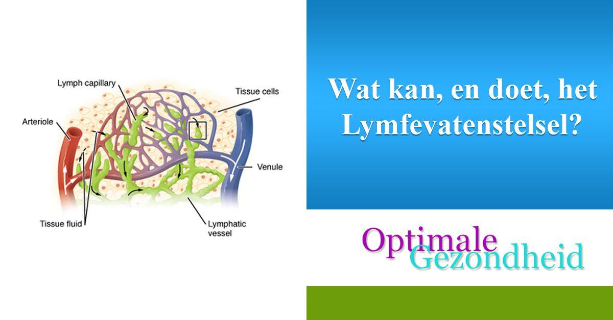 Wat kan, en doet, het Lymfevatenstelsel