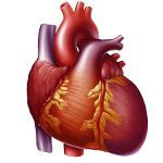 doodsoorzaken zoals hart- en vaatziekten