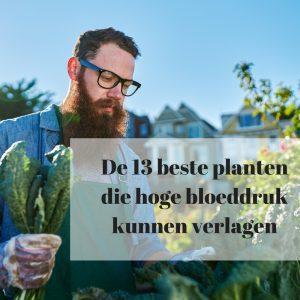 planten die hoge bloeddruk verlagen