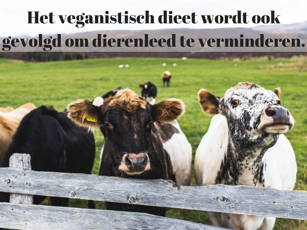 veganistisch dieet tegen hoge bloeddruk