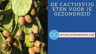 De cactusvijg eten voor je gezondheid