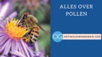 Alles over pollen