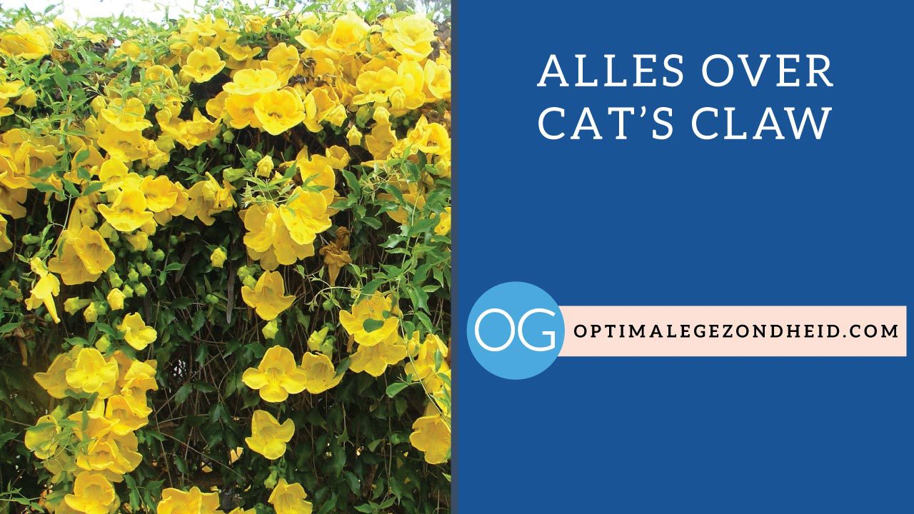 Alles over cat's claw